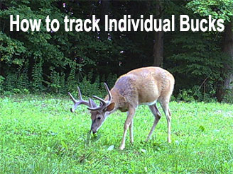 How to Find, Follow, and Pattern Big Bucks