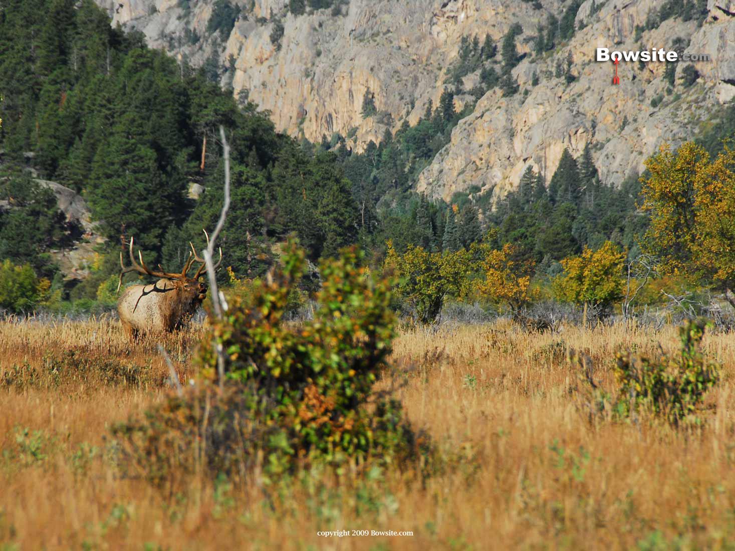 Elk Hunting Backgrounds