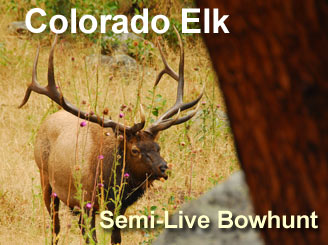 Bowhunting Elk in Colorado - a Semi-LIVE Bowhunt from