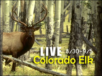 Bowhunting Elk in Colorado - a Bowsite com Live Bowhunt